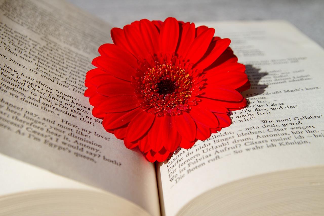【ホリエモン】英語の多動力を読んでグサグサ心にささった私の感想。